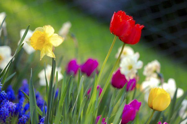Hová lett a tavasz