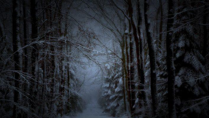Erdőszélen mélázva egy havas estén